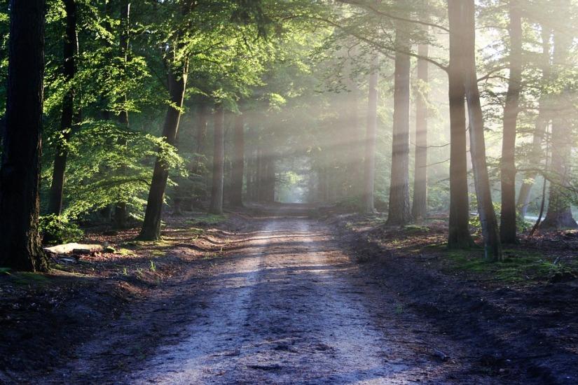 bos-gezonde-leefstijl-puurvangeluk