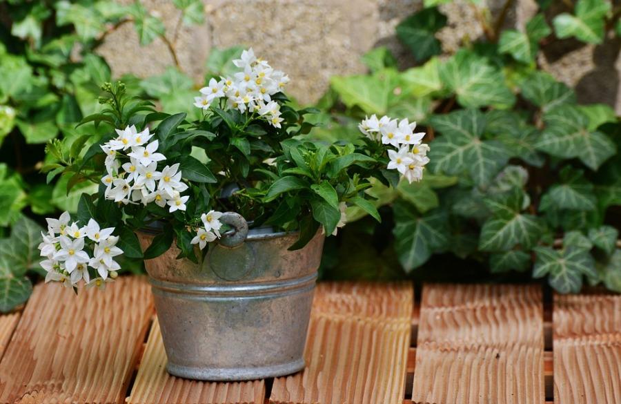 bloembakken-onderhoudsvrije-tuin-puurvangeluk