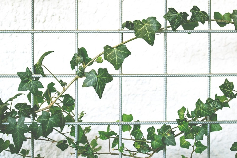 tuinaanleg - puur van geluk