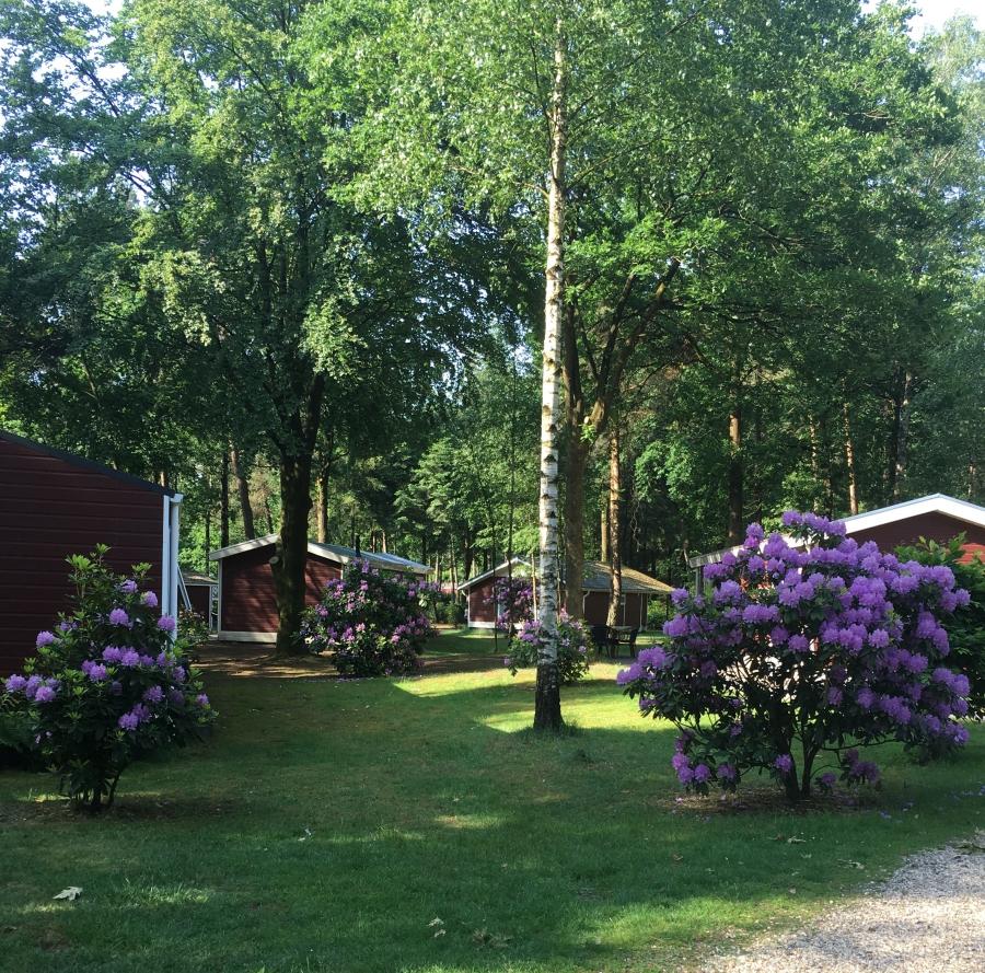 wellness-chalet-bossen-vakantiepark-puurvangeluk