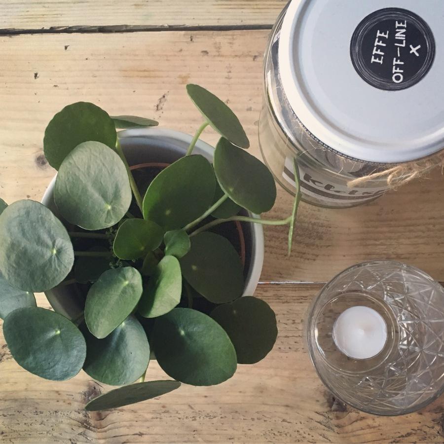 groen-geluk-planten-puurvangeluk