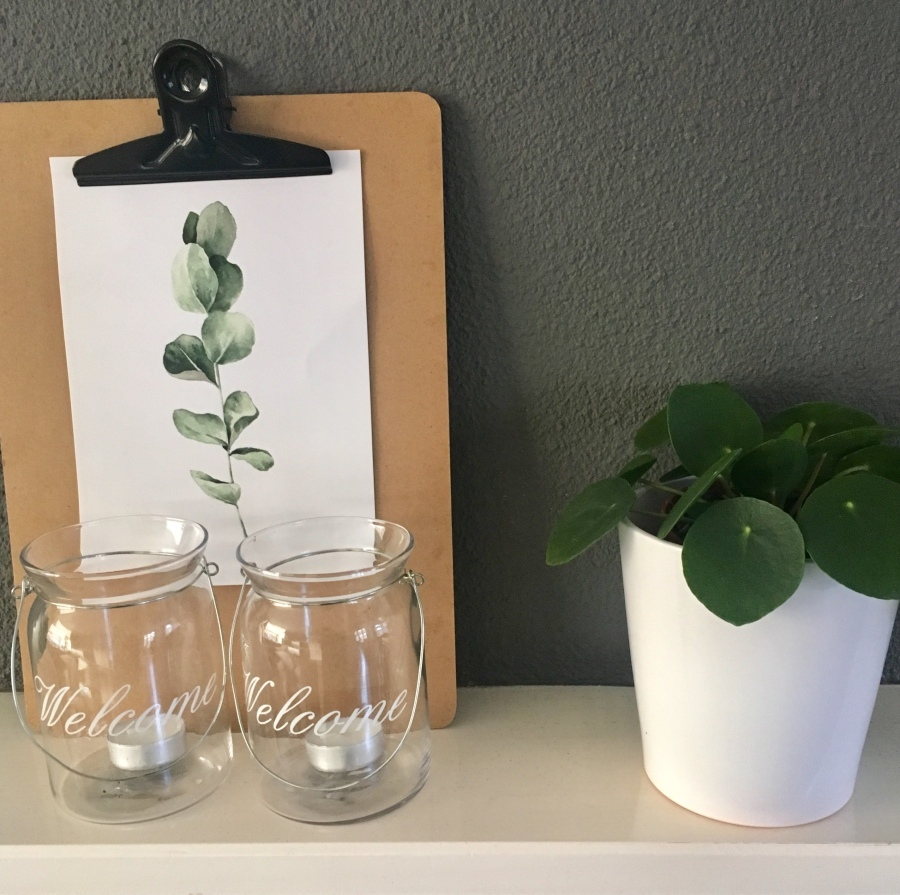 pannenkoekenplant-groen-geluk-puurvangeluk