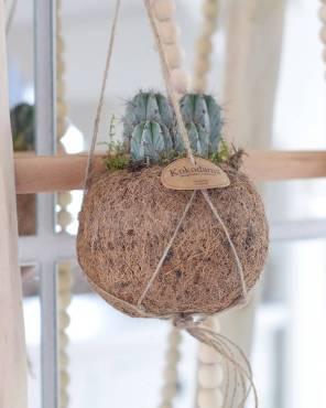 kokodama-cactus