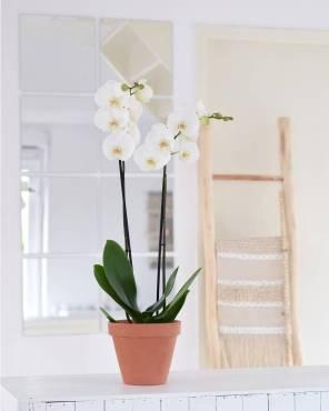 orchidee-white-world