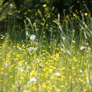 meadow-123280_960_720