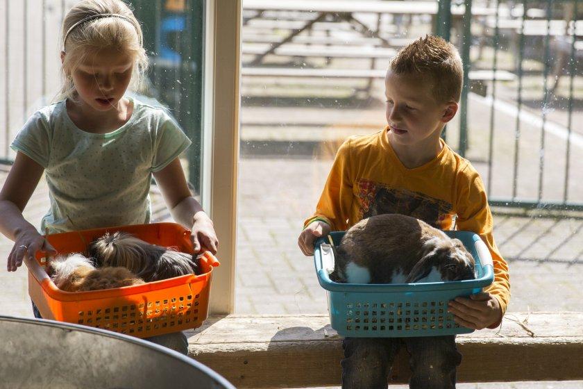 kinderboerderij-konijnen-knuffelen-840x560