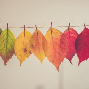 leaves-2602595_960_720